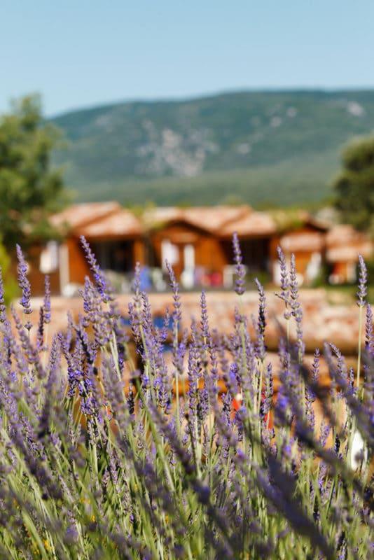 domaine sevenier camping location vacance en ardeche chalet chene vert 8 534x800 - Gallery